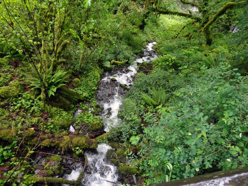 little streams1