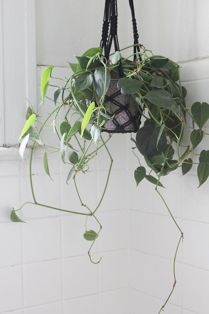 hanging plant edit1